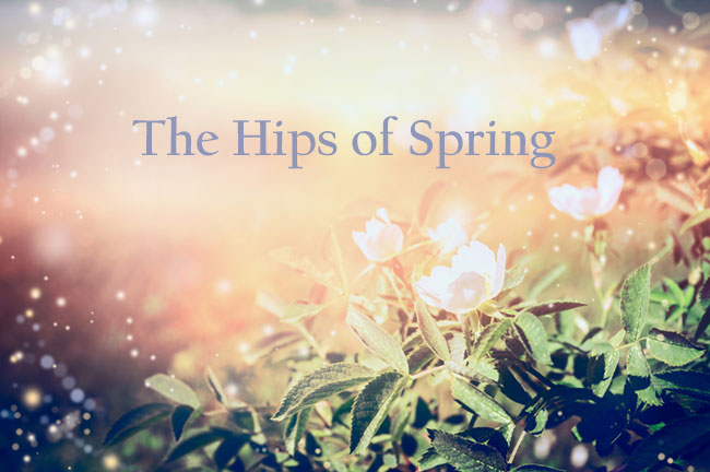 The Hips Of Spring - Written by Ena Burrud Rodriguez